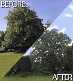 Before & After Tree Care