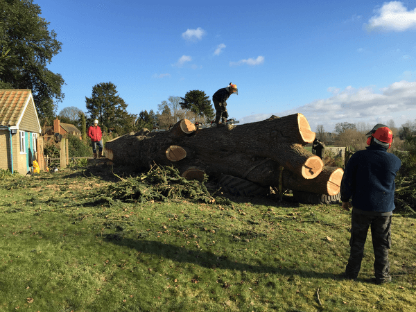 Tree Felling in Worcestershire/Warwickshire border