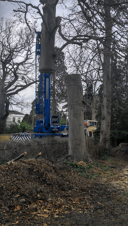 Tree Removal in Cheltenham