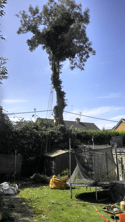Tree Removal in Pershore